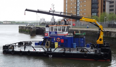 Shake Dog in May 2015 with her new crane